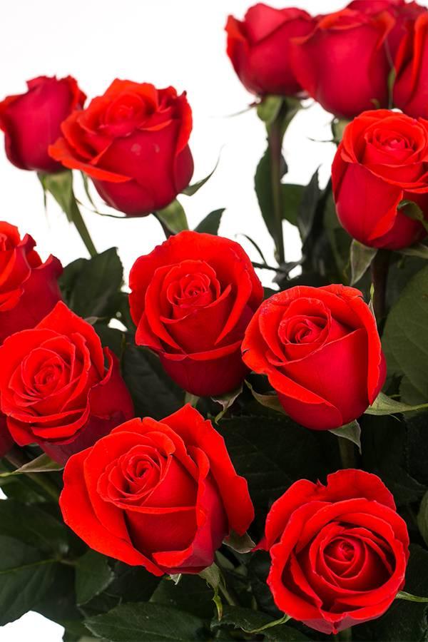 Роза алая 80 см.