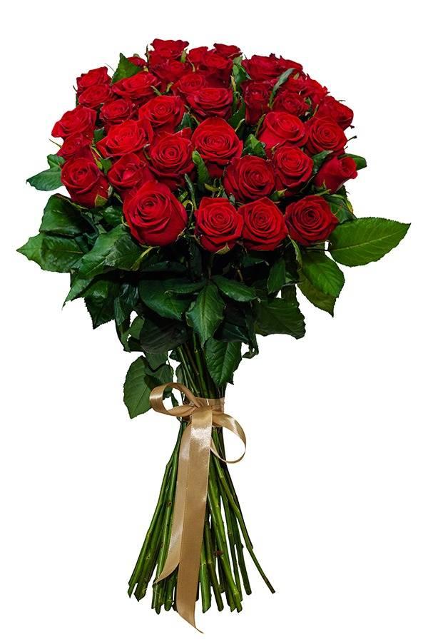 Роза красная 70 см.