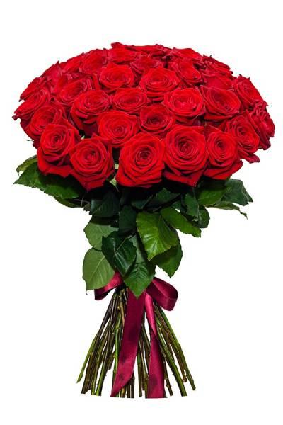 Роза Россия 50 см.